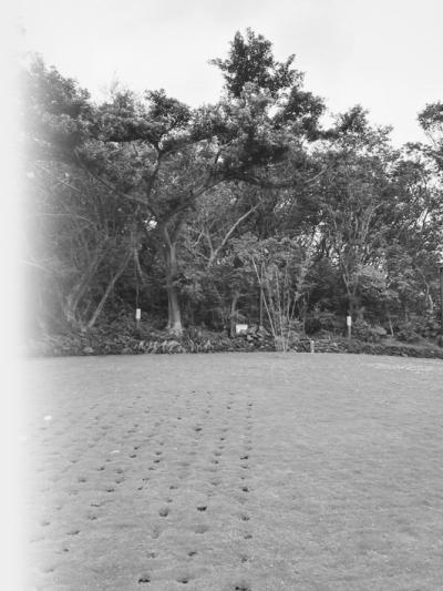 在金山环保生命园区,300多平方米的草地安葬着5000多位先人。