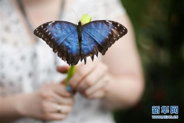 一字蝴蝶步骤图解