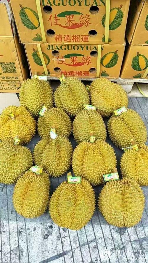 """""""水果皇后""""榴莲降价了!即墨批发市场500克低至11元"""