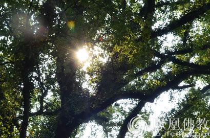 一日禅:心中无法锁住的地方叫希望