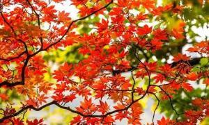 秋日的神灵寨给你童话般的世界