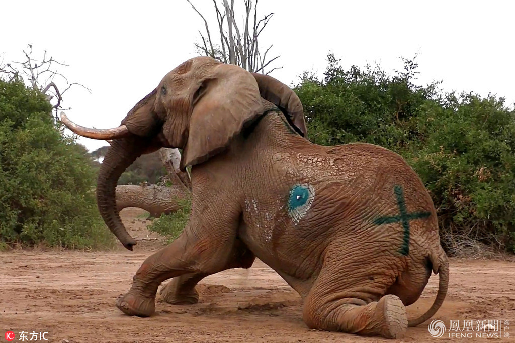 大象雕塑cad平面