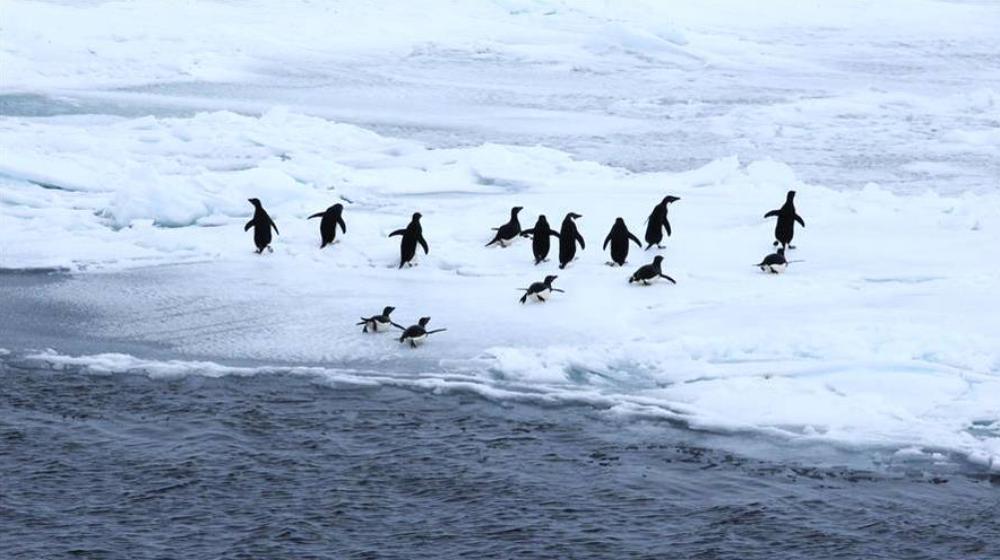 """第34次南极科考:""""雪龙""""号进入南极"""