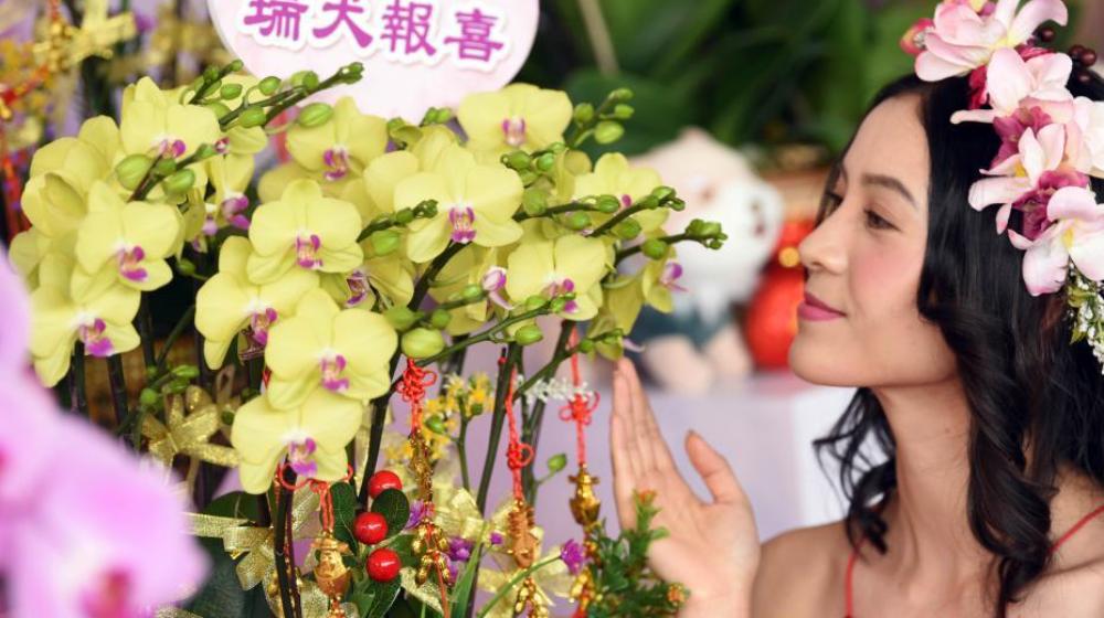 香港迎春年花亮相 超大兰花组合吸引眼球
