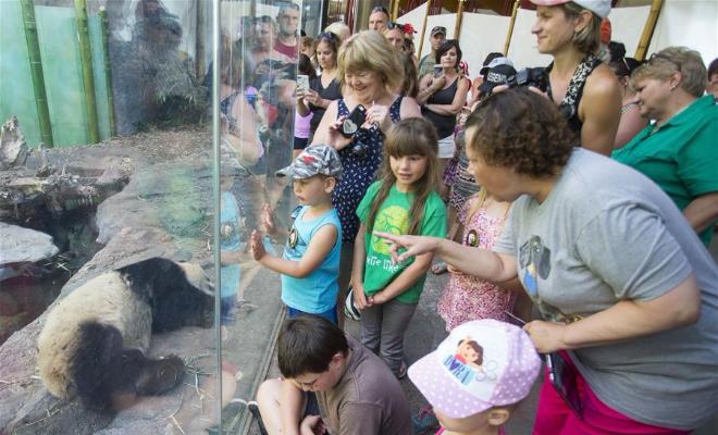 大熊猫暑假受热捧