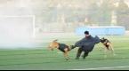 河北省代表队获全国警犬技术比赛团体第一名