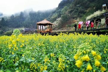 乡村游不知道去哪?湖南新增377家星级休闲农业企业