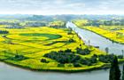 用油菜花种植的直径达236米的中国最大太极图,展示了崇龛作为道教始祖故里的别样风情。