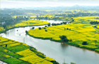 金灿灿的油菜花在碧波荡漾的琼江河上形成一道靓丽的风景。