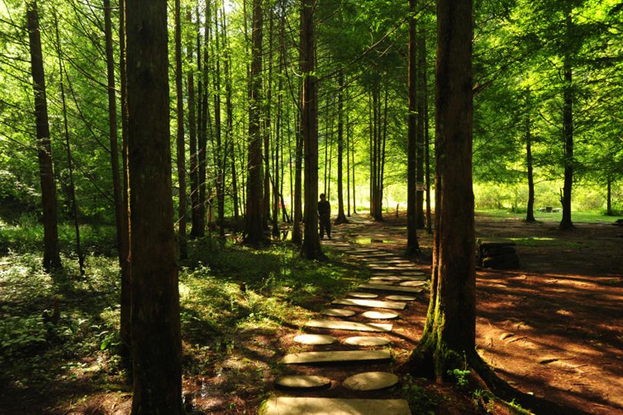 毕兹卡绿宫景区