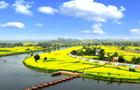 阳春三月风光好,陈抟故里菜花黄。