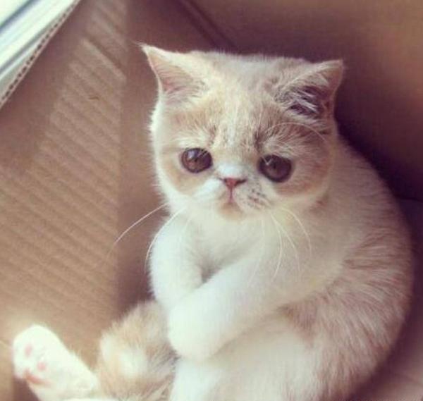 猫咪不能吃的的食物