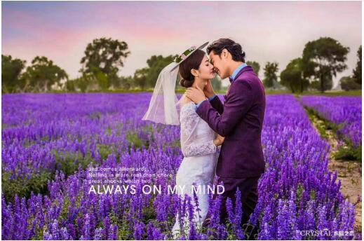 北京婚纱摄影排行榜 花海婚纱照哪里寻 水晶之恋有惊喜