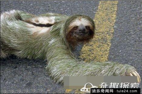 广州街道下水管竟爬出惊人怪物 还记得疯狂动物城里的树懒吗?