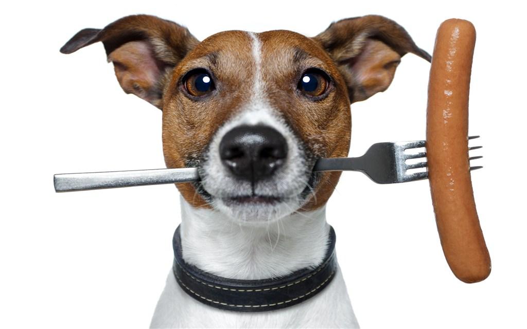 狗狗吃太饱难受了怎么办,狗狗不消化的解决办
