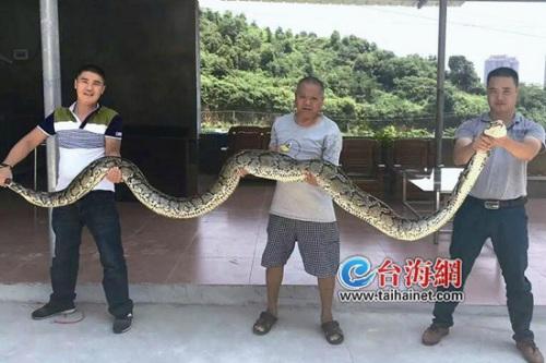 男子抓到瘫痪巨蟒 剖开后惊呆 肚子里找到找到了一条鳄鱼