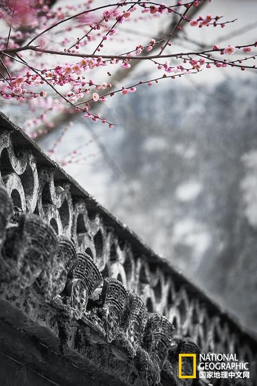 烟花二月去一趟徽州,你的春天才叫完美!