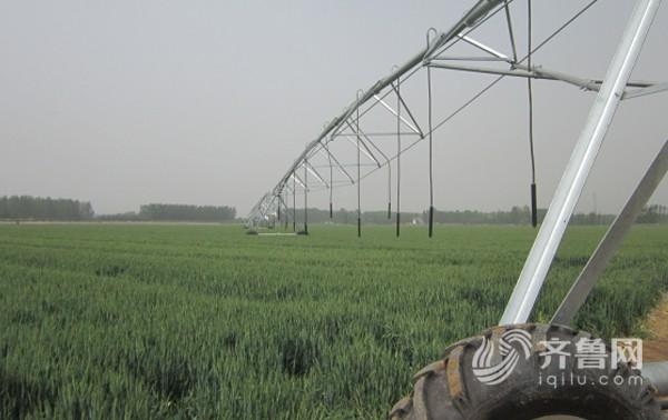 位于齐河县致中和农场高效节水灌溉试点项目区内的中心支轴式喷灌机