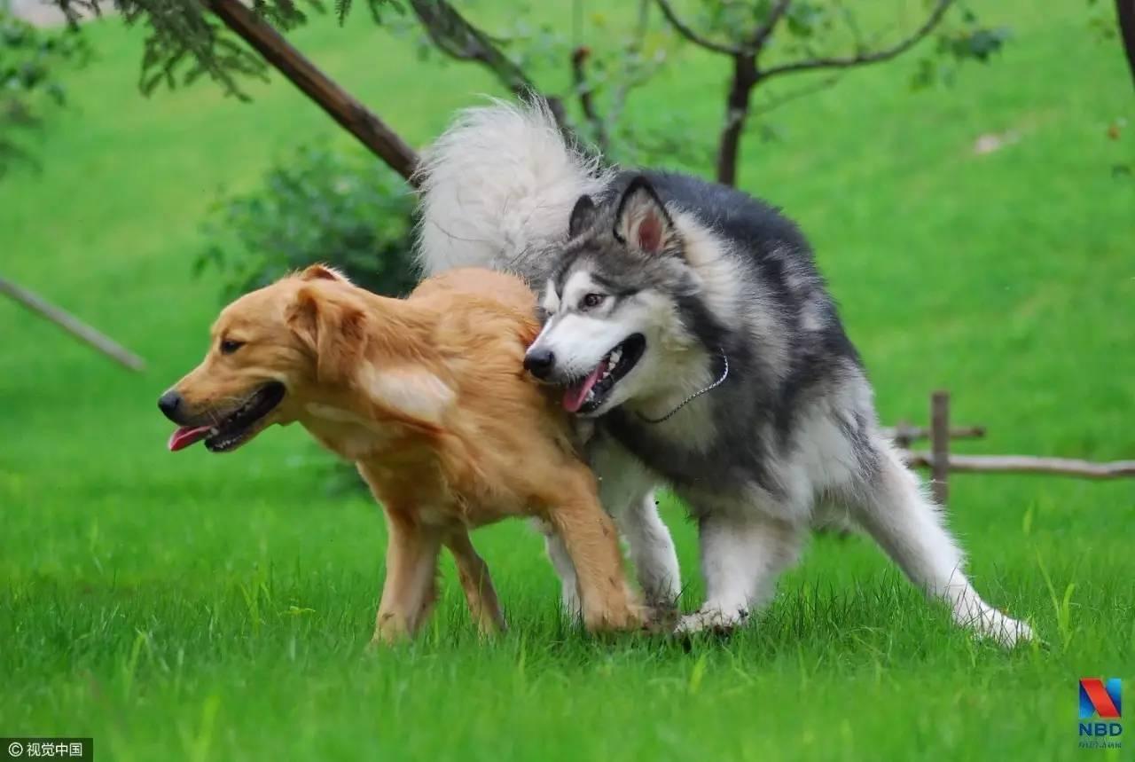 卖狗粮的公司也要上市 佩蒂股份2016年净利率高达15%拟在创业板上市