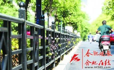 合肥首条精品道路月底竣工芜湖西路西段新增2个游园