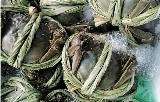 海归夫妇放弃北京高薪工作 在江苏养殖大闸蟹(图)