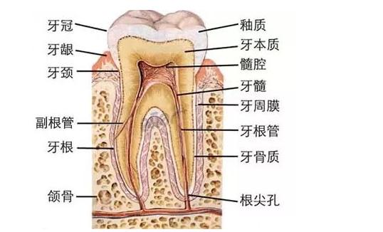 知道你的牙齿有多脏吗?牙缝都积满了细菌,洗牙的9大谣言需知道