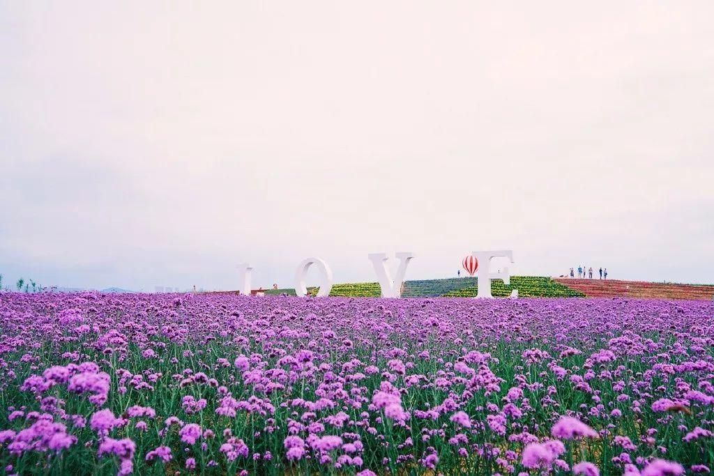 概览】青岛(奥林匹克帆船中心)-海泉湾度假区-海阳连理岛-大顶-威海