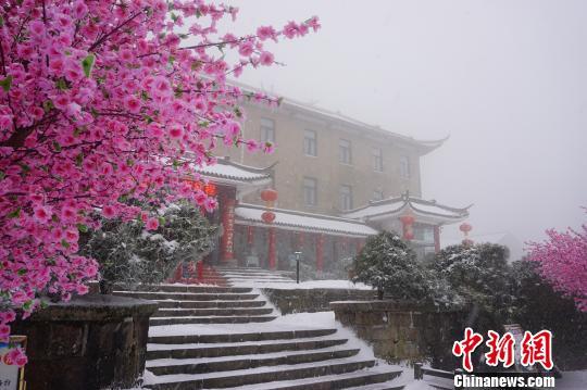 """山上迎新春的装饰花与白雪""""争春""""。 黄山风景区供图摄"""