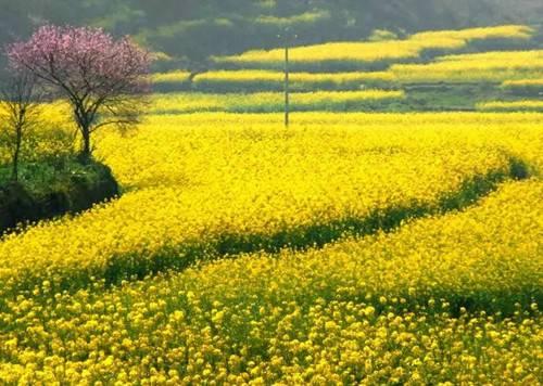 千万别错过一晃而过的春天快和家人朋友到嵩县赏花游玩吧
