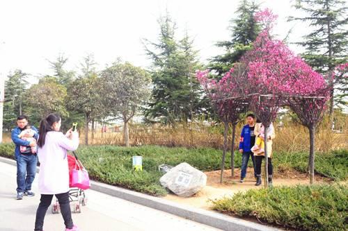 花开春意浓绿博园掀起踏青热