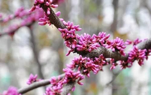 春天和TA约定一起去看大美尧山