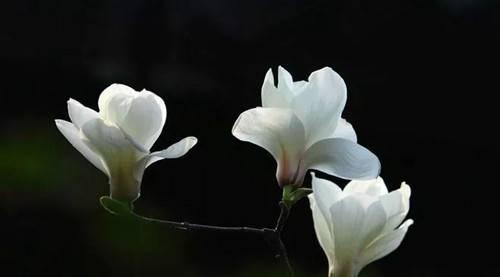 莫负好春光郑州绿博园赏花正当时