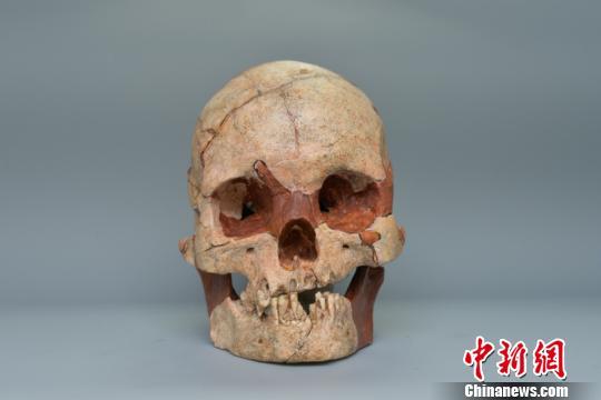 图为人类头骨化石钟欣摄