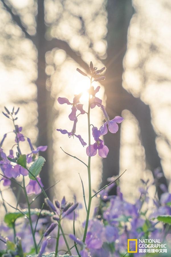 醉美西湖,四月的诗意全都融化在这一池春水里了