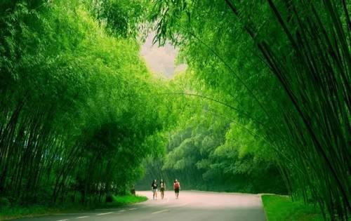 千年菩提花绽放雨后春笋生黄角重渡沟景区邀你游山玩水、品美食