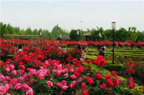 初夏时节一起到绿博园赏花吧