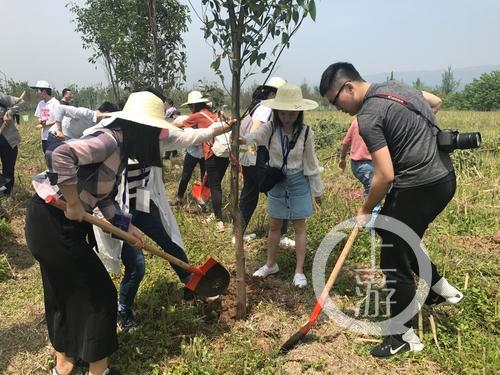 5月13日,共舞长江经济带网络媒体行的记者和志愿者在广阳岛长江边植树。2.png