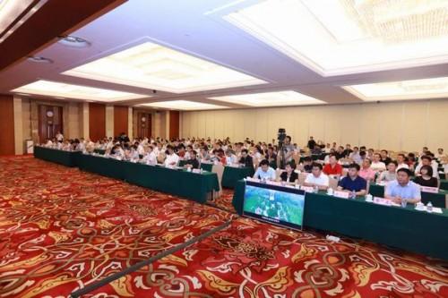 """本次会议决定"""" 海南自贸区自贸港工程建设项目""""突出点对点招商,包括图片"""