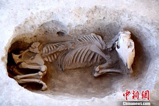 马坑。陕西省考古研究院供图