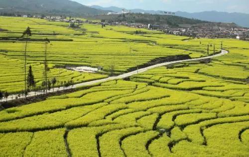 山西晋中农谷将打造首溯食品安全区块链溯销平台体系!