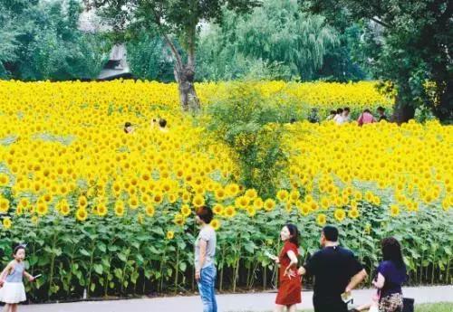 沈阳市和平区:高品质生活节许您一份悠闲时光