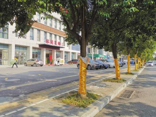 """行道树穿""""马甲"""" 滁州城管责令拆除"""
