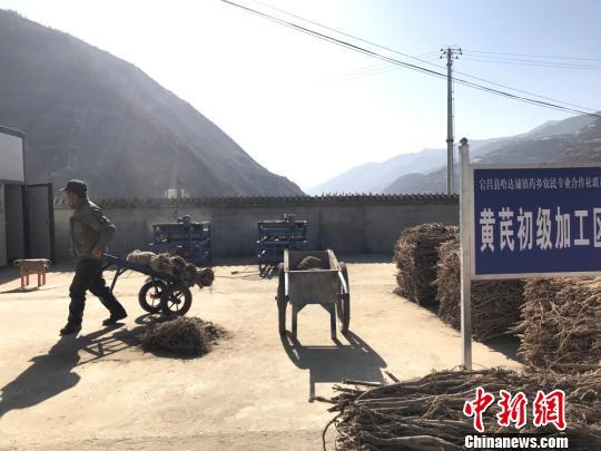 2019年1月29日,甘肃陇南市宕昌县哈达铺中药材加工厂内,当地农民加工药材。图为黄芪初级加工区。(资料图) 闫娇摄