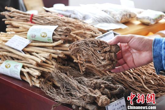 图为2018年10月,甘肃张掖市民乐县中药材博览会上的中药材。(资料图) 杨艳敏摄