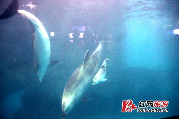 可爱的小海豚成功降生.
