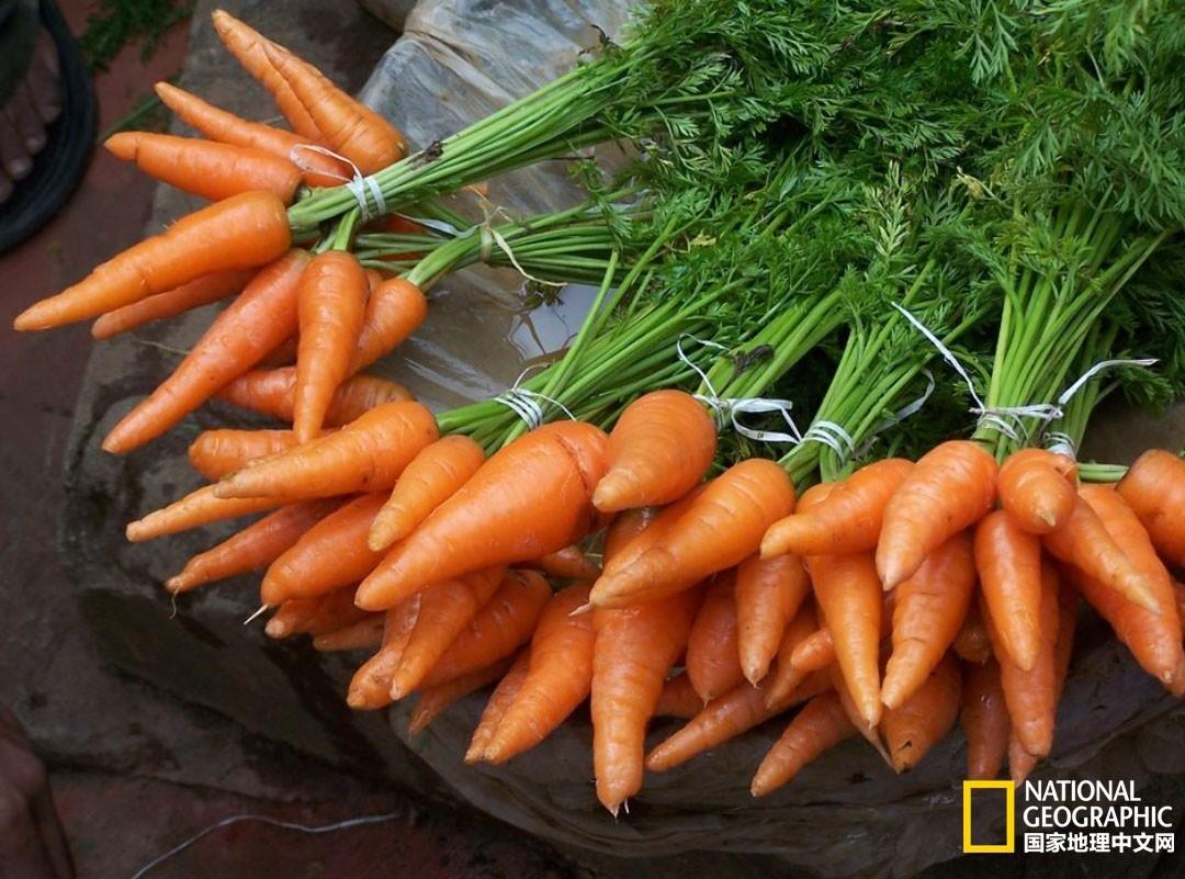 动物肝脏,胡萝卜可增加抗寒能力