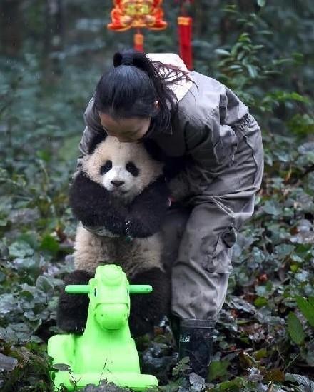 8只熊猫宝宝集体亮相拜年网友:该洗澡了