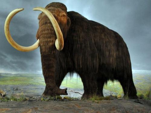 """哈佛研究团队:有望在2年内""""复活""""猛犸象(组图)"""