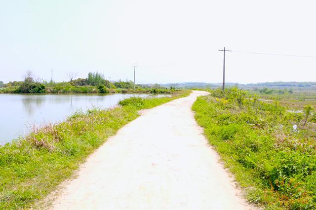 过去,施林江走这条路上学,后来,因为假肢走不了泥地,于是转学去了镇里