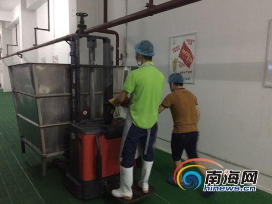 工人将刚发好的豆芽成品放上输送带。南海网记者徐静涵摄